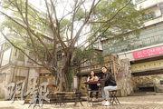 佛山有個老香港  城寨做英雄  榕樹頭唞涼