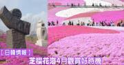 【多圖‧日韓情報】芝櫻花海色彩鮮艷  4月觀賞好時機