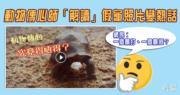 【網絡熱話】動物傳心師「解讀」假龜照片變熱話 網民反應兩極