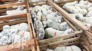 Ovis 21醜聞——動物權益組織在網站發布視頻,拍攝了Patagonia的羊毛供應商Ovis 21在南美經營的牧場涉及不當情况,如羊欄擠迫、活剝羊皮等,拍攝當天農場經理不在,Patagonia隨即宣布停止購買Ovis 21的羊毛。