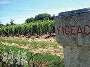 光是說葡萄園緊貼在白馬酒莊,就會令人對它的紅酒另眼相看。其實 Château Figeac 是 Saint Emilion 一級B等列級酒莊,價格相對便宜,也是Saint Emilion 最大的莊園。