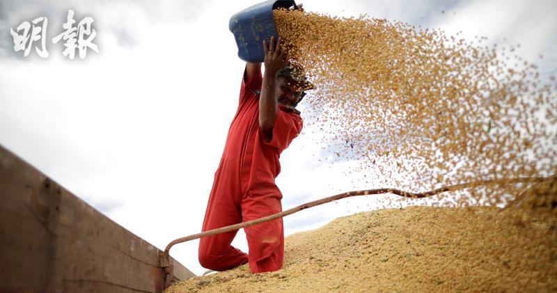 傳中國買家重返美國大豆市場 惟尚未達成交易