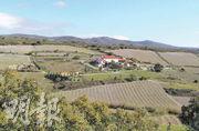 葡萄園在人煙罕見的地中海沿岸山區,靠近西班牙。這裏曾經有不少的佳麗娘(Carignan)百年老藤,可釀造出令人驚歎的好酒。