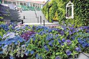 葵芳新都會廣場以「花言蜜語」主題推廣,於商場內佈置一片紫色季節主題花海。