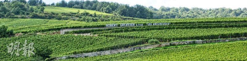 哪個酒鬼來 Chambolle-Musigny 逛酒莊不先去拜訪一級園Les Amoureuses的?比頂級園名氣更大更昂貴,只有5公頃的葡萄園 Domaine Robert Groffier 獨佔三分一。