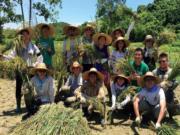 義工參與「滙豐永續鄉郊計劃」,體驗收割稻米