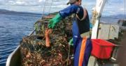 彭博:澳洲龍蝦或經香港進口至中國市場