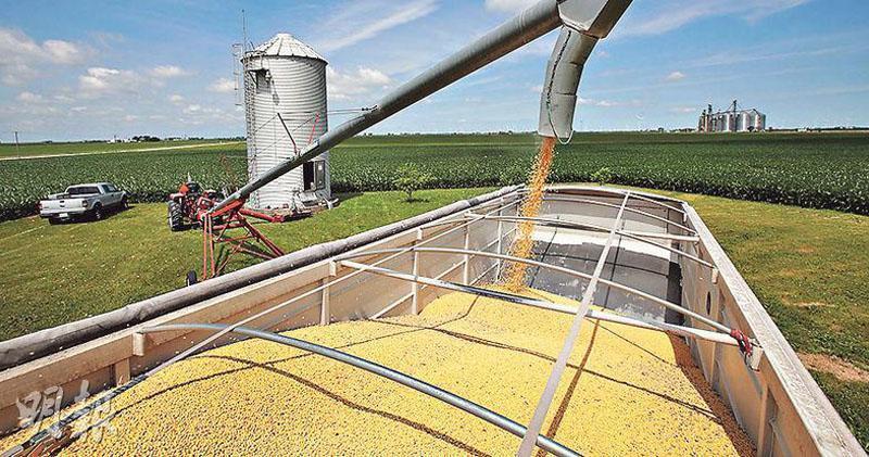 中國取消13.2萬噸美國大豆訂單 轉而採購更昂貴的巴西大豆