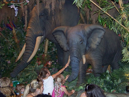 又一城的熱帶雨林餐廳是香港主題餐廳的經典,內滿布大樹、野生動物擺設。(網上圖片)