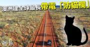 澳洲建全球最長帶電「防貓欄」 圍封保護區防極危本土動物遭獵殺