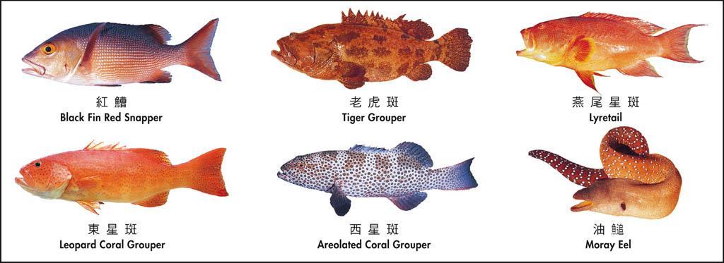 慎防中雪卡毒 專家教你5個貼士 海魚魚頭、魚皮、魚卵食得嗎?