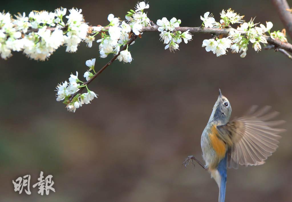 春回大地 鳥語花香