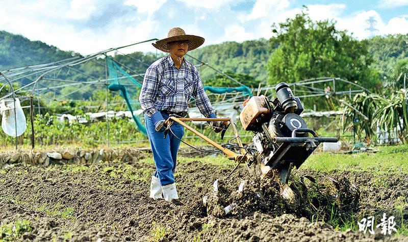 彩虹有機農莊負責人陳天俊原本經營蠟燭廠,金融海嘯後結業,自此歸隱田野,自得其樂,他說本港農業面對最大問題是土地,以他的農場為例,每3年要續約一次,令投資者卻步,不願投入更多資金提升場內設施,影響競爭力。(馮凱鍵攝)