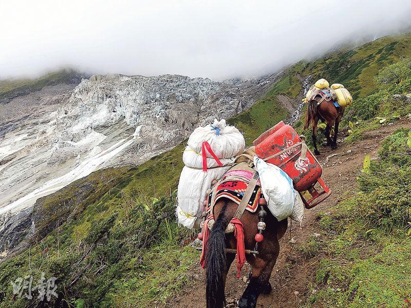 騾仔運輸——大本營下是尼泊爾人的簡樸村莊,騾仔負着登山者的食糧與裝備,在蜿蜒的山路前進。(圖:受訪者提供)