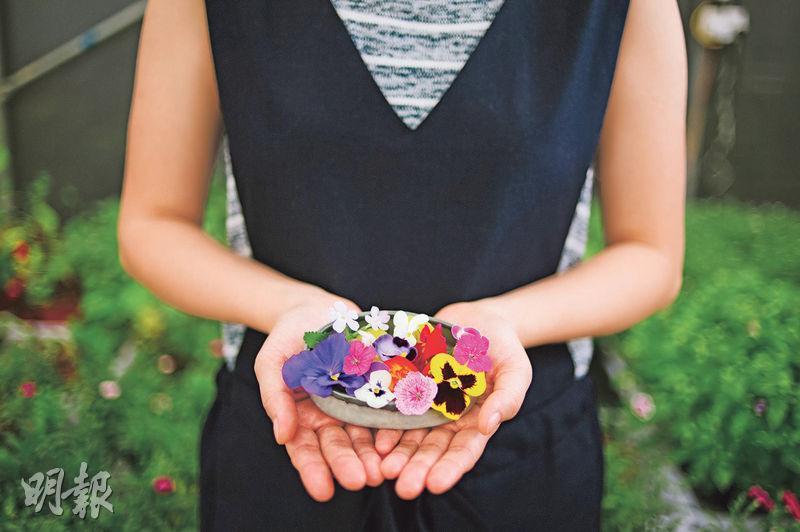 奉上鮮花——每星期Silvia都會到元朗打理花卉,小心收割後,馬上送給客人。(圖:馮凱鍵)