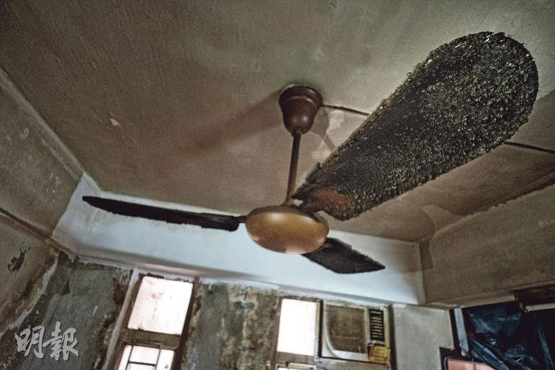 小張稱客廳吊扇有逾20年歷史,多年來未曾清潔,扇葉鋪滿厚塵及黏滿小飛蟲屍體,縱使吊扇仍可使用,但怕墜落及散播細菌,故甚少開啟。(蘇志鑫攝)
