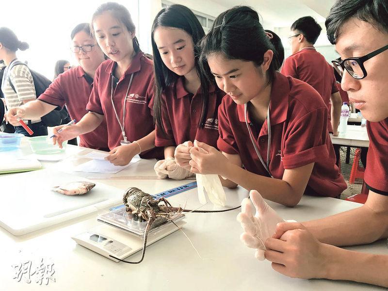 26名高中生參加城大動物及生命科學院舉辦,為期12日的暑期體驗課程,於課程尾聲參觀沙頭角水產養殖中心。圖為學生於水產養殖中心室內量度龍蝦殼大小和重量,了解龍蝦的習性。(譚琦玉攝)