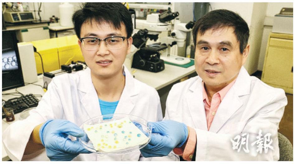 港大機械工程系王立秋教授(右)及朱平安博士(左)展示由他們研發的防水防油物料,可看到用上這物料後,液體在布上如同一粒粒水珠,不會被布吸收。
