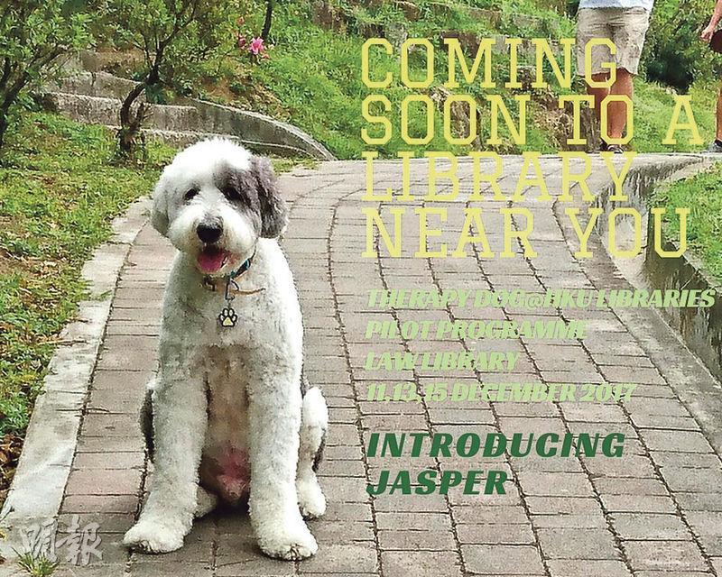 港大圖書館下月起推出駐館治療犬試驗計劃,呢隻治療犬名叫熊猫,英文名Jasper,係英國古代牧羊犬。(港大提供)