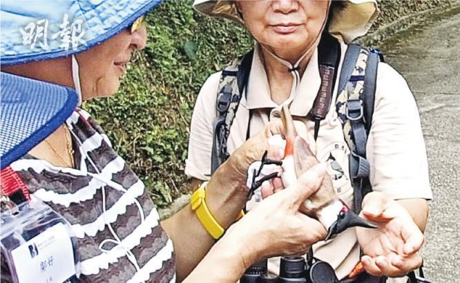 協助聽鳥——香港觀鳥會近期亦有服務香港失明人協進會,帶視障人士到大埔滘聽鳥。(圖:受訪者提供)