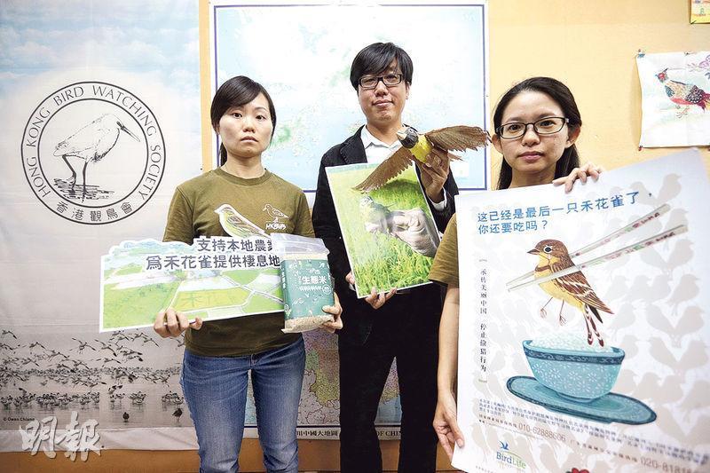 香港觀鳥會將2018年訂為「國際禾花雀關注年」,研究經理余日東(中)表示,觀鳥會在今年10月至11月總共為21隻禾花雀戴上金屬環及彩環,環上刻有特定號碼,以追蹤其移動及遷徙,從而做到保育。旁為項目經理楊莉琪(左)和發展及中國項目經理傅詠芹(右)。(曾憲宗攝)