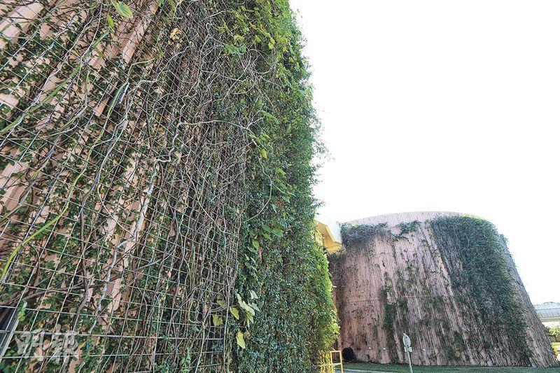 渠務署喺沙田污水處理廠嘅污泥儲存缸垂直綠化,吸引雀鳥昆蟲嚟棲息覓食,以增加生物多樣性。(政府新聞網圖片)