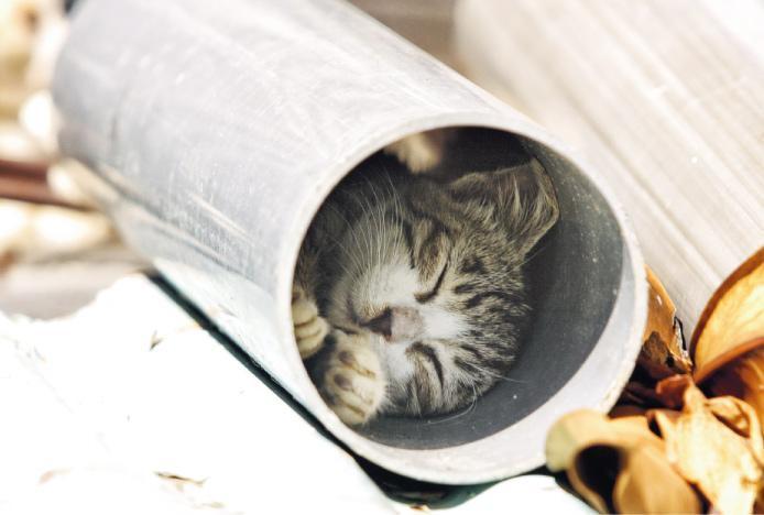 《膠囊旅館》——吳毅平來港沒走進城市高樓窄巷,反而到南丫島尋貓,並拍下《膠囊旅館》。(圖:吳毅平)