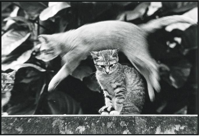 黑白貓——黑白照用菲林拍攝,由於場地有限,今次展覽不會展出。(圖:吳毅平)