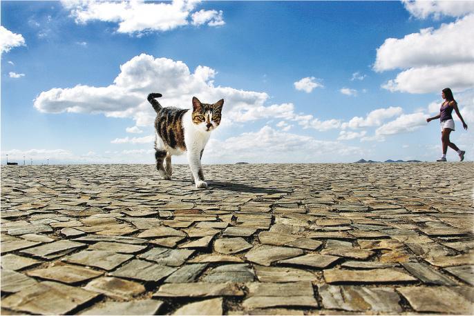 《當世界只剩下貓》——吳毅平於巴西拍下得意之作,並成為二○一二年影集《當世界只剩下貓》封面。(圖:吳毅平)