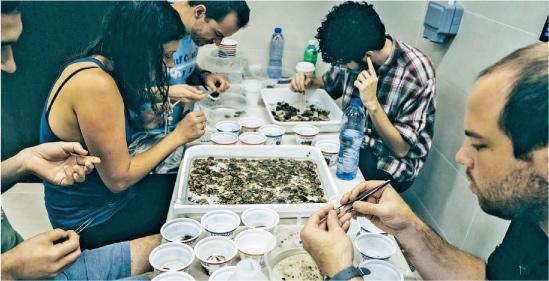 參與計劃的學生及科學家會細心地將沒有牢固在多層附着板裝置(ARMS)上的東西刷掉及挑出,並會以肉眼分辨,嘗試找出不同的生物如螃蟹和蝦等,再將生物交給分類學家。(港大圖片)