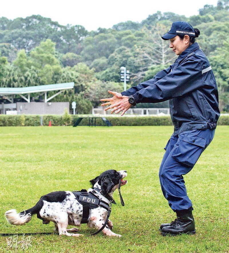 叢慧玲(Eva)加入警犬隊24年,對於訓練警犬,她堅持不會以食物作獎勵,以訓練警犬紀律,不會在工作時亂吃食物,若警犬做得好,她會「拋波」作獎勵,警犬見到亦會興奮得搖尾。(鍾林枝攝)
