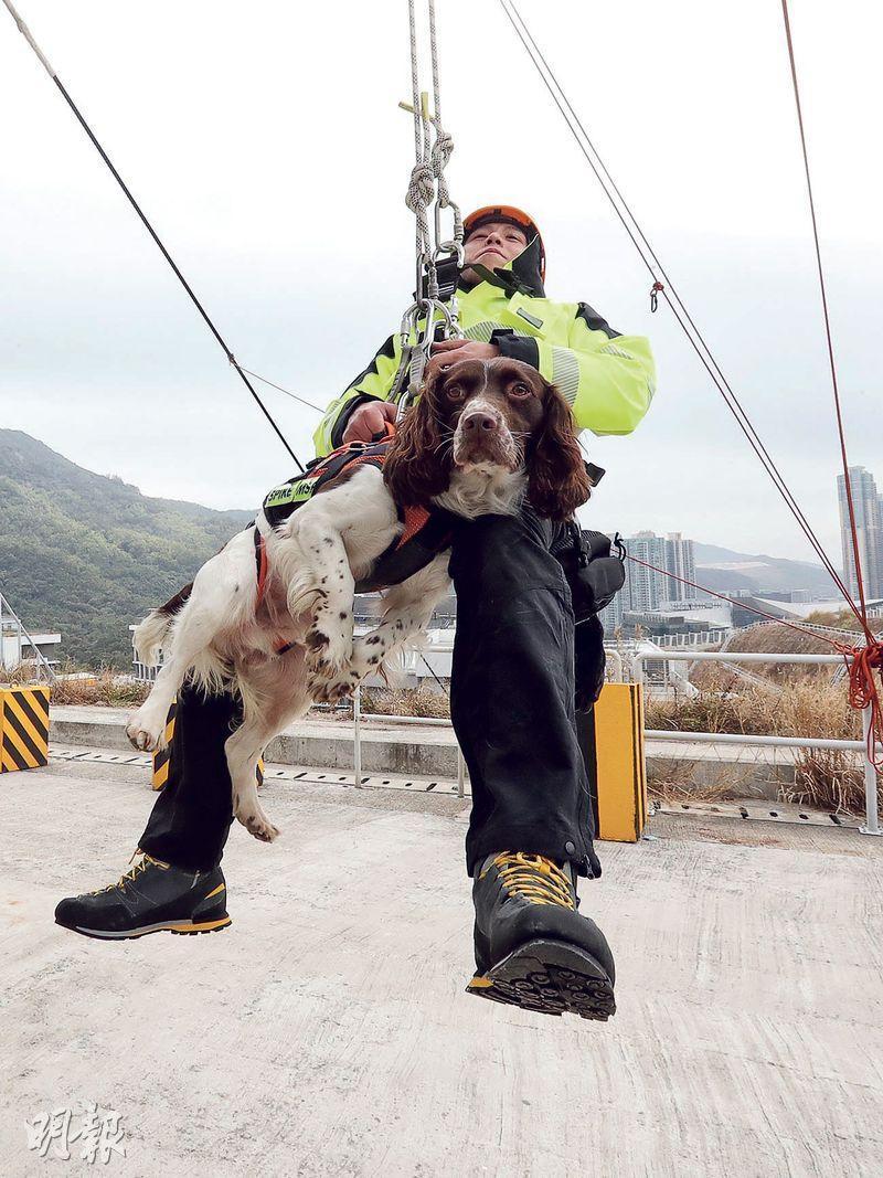 消防搜索犬Spike曾被直接吊上直升機送到行動地點,幸牠沒有畏高,落地後反應敏捷。圖為攀山拯救隊員示範與搜索犬同被吊起。(李紹昌攝)
