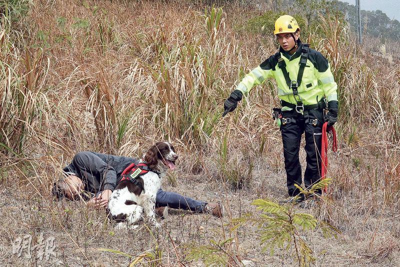消防搜索犬嗅覺靈敏,會按人類走過的路徑追尋其氣味,搜索到目標待救者後,便會坐在其旁以待搜救人員到場。(李紹昌攝)