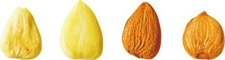 比較色澤——要看杏仁是否新鮮,從色澤可略知一二。左一、左三較深色暗啞,相比其餘兩顆明亮具光澤的,謝煖新指,它們應已擺放一段長時間。(黃志東攝)
