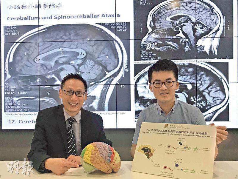 中大生命科學學院教授陳浩然(左)及研究人員陳哲凡(右)多年研究,發現當Fuz蛋白超過正常水平2.5倍時,會導致神經元死亡,引致小腦萎縮症等罕見神經系統疾病。(陳嘉詠攝)
