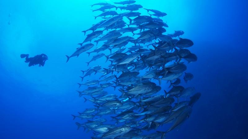 受惠於潛水活動收費及儀器費用有所下跌,令活動愈趨普及,帶動市場對潛水教練、潛水長需求上升。
