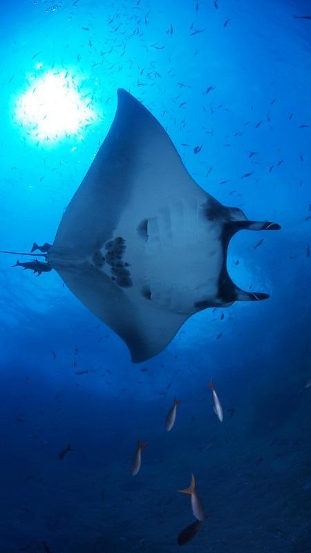 潛水歷險會創辦人區紹堅指,潛水教練需增進生物、旅遊、科學等不同層面的知識,單是以海洋生物為例,種類、品種已很多,要花時間記下牠們的特徵、習性。