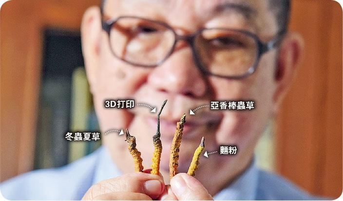 以假亂真——圖中4條「冬蟲夏草」,只有左邊第一條是正品,其餘的是3D打印假蟲草、亞香棒蟲草、麵粉製的仿蟲草。(黃志東攝)