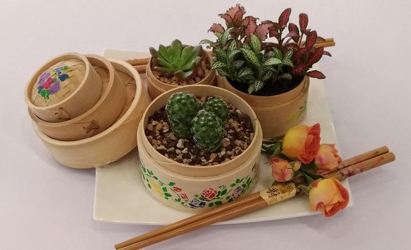 Samuel 希望將園藝治療的知識和技巧融入工作中。圖為他的作品「植物派對」中的點心盆栽。