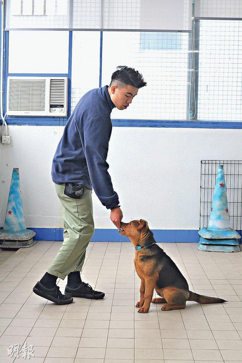 獎勵增學習興趣——正向訓練愈來愈流行,以獎勵提升狗的學習興趣,當牠做出正確行為便給予獎勵,讓牠知道這是正確的行為。(楊柏賢攝)