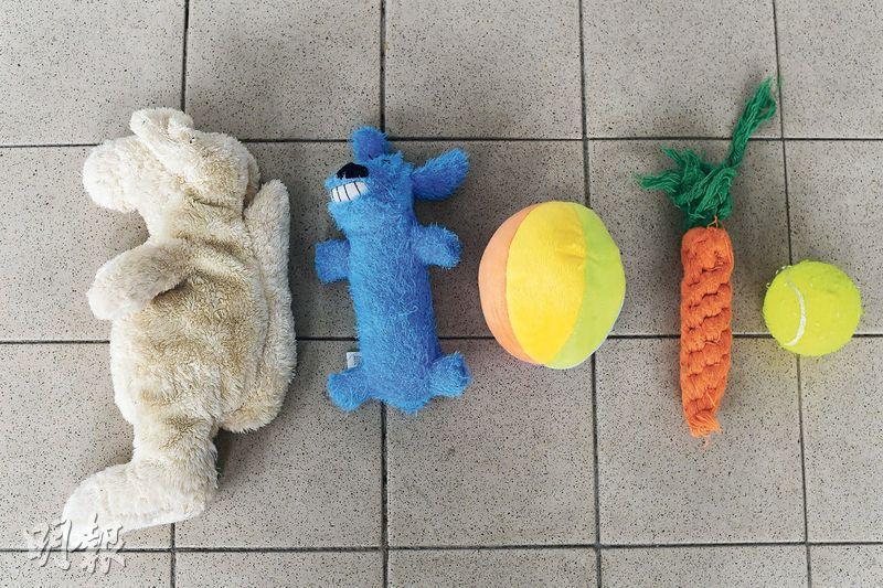 玩具訓練獨處——有些狗過分倚賴主人,當主人不在家時便會焦慮,不斷吠叫。主人可嘗試在家中架設圍欄,裏頭放牠喜歡的玩具或益智玩具,讓牠專注玩耍,適應獨處。(楊柏賢攝)