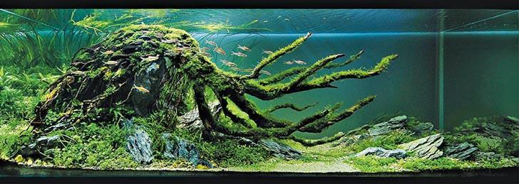 傲骨 Lofty Spirit﹕Dave 在2010年憑作品「傲骨」再於日本ADA世界水草造景大賽揚威,奪得優異獎。(受訪者提供)