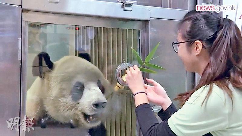 獲選為「四川臥龍國家級自然保護區青年實習計劃」嘅學員,有得親親熊貓,包括餵佢哋食嘢(圖)。(政府新聞網facebook截圖)