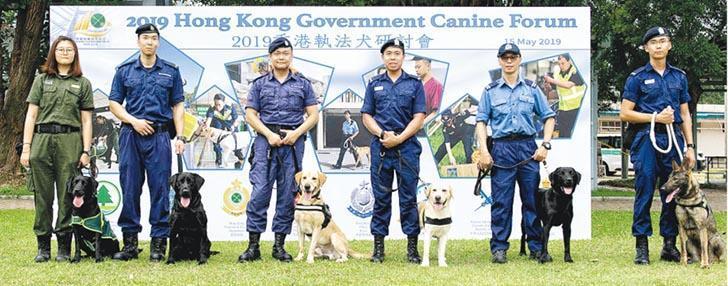 海關噚日舉辦「2019香港執法犬研討會」,各個執法部門嘅執法犬,同埋佢哋嘅領犬員拍檔聯合演練,包括穿越障礙物、依照指令檢取物件等。(政府新聞處)