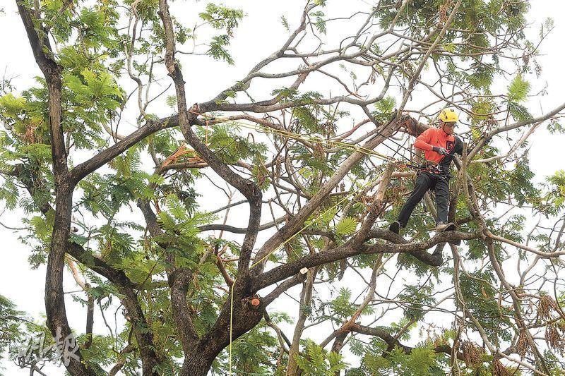城市林務基金第四季推 資助青年讀樹藝課程