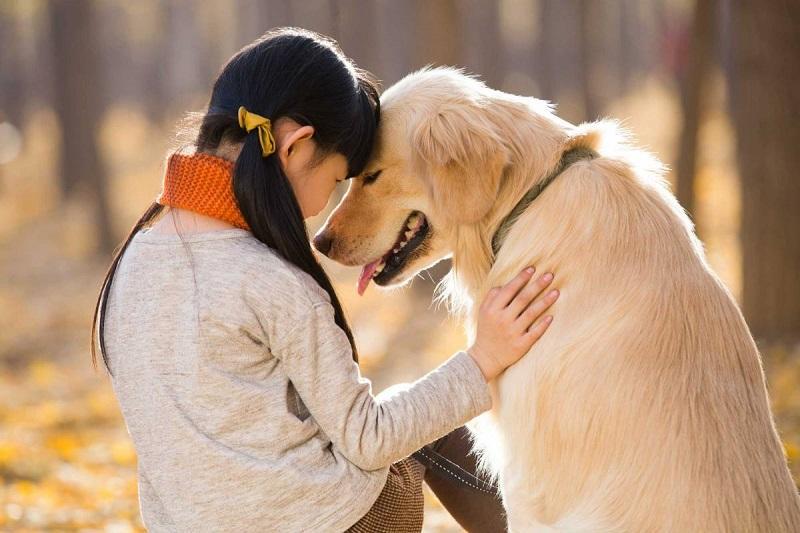 人和動物相處的時候,會產生「快樂荷爾蒙」,提高服務對象接受治療的動機。(網上圖片)