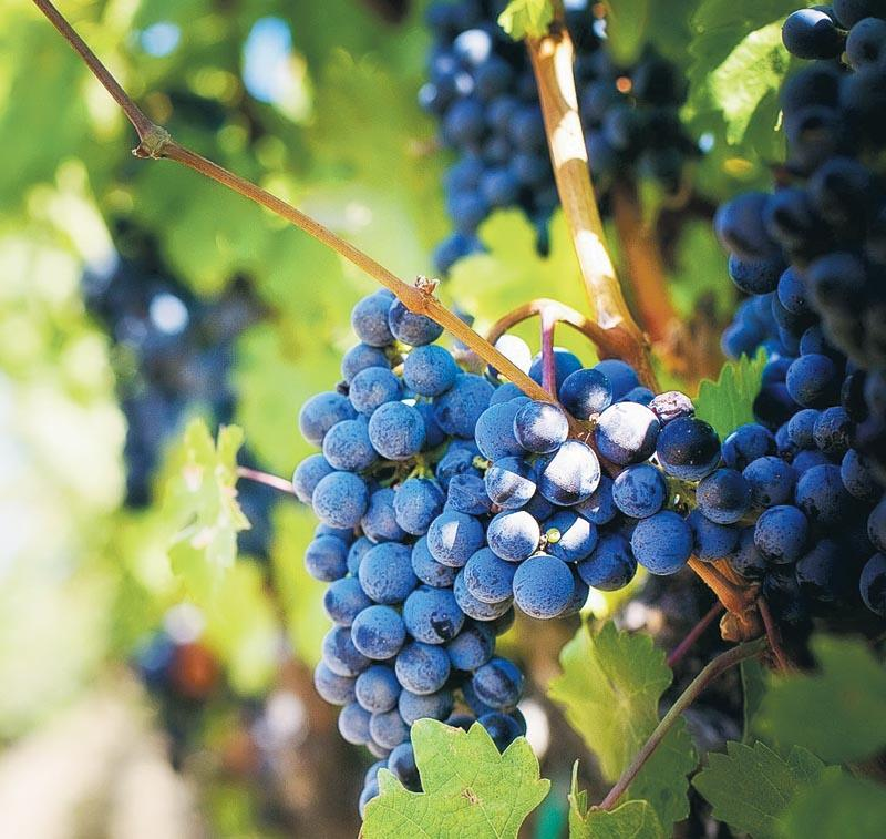 品酒師需具備豐富的葡萄酒知識,從葡萄品種、土壤氣候、產區、酒莊、釀製技術,以至酒窖管理等都要一一掌握。