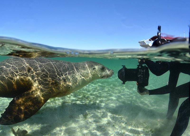 海洋生態導賞員不僅要懂得潛水、具備豐富的海洋生態知識,包括懂得辨認不同的海洋生物,例如:海兔,若能兼備水底攝影技巧,更能迎合不同團友的需要。