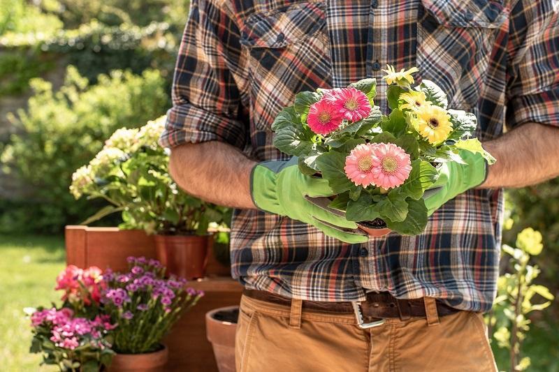 園藝助理入職門檻不高,而且有一定市場需求,適合喜愛花草樹木及大自然的人士投身。(相片來源 : http://pixabay.com)