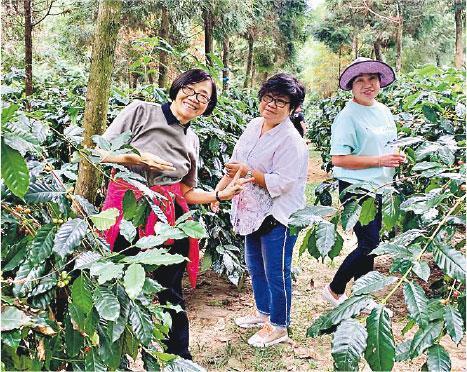 赴台學習——汀姐與參加者到台灣學習用時令水果果皮如百香果等釀漬成果露,以及到咖啡莊園摘新鮮咖啡豆(圖)。(受訪者提供)